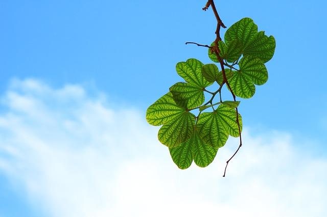 gałązka z liśćmi na tle nieba